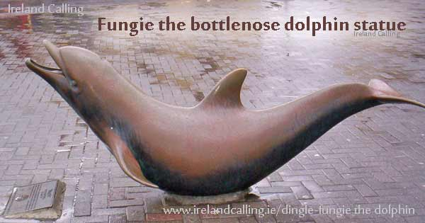 Fungie the bottlenose dolphin
