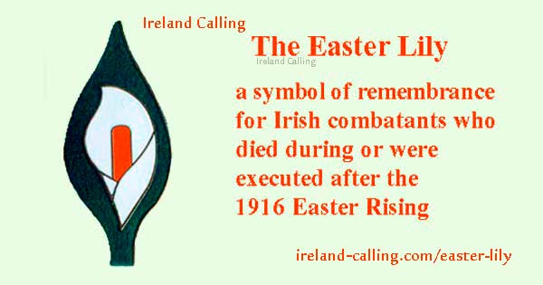 Easter Lily. Irish symbol of peace