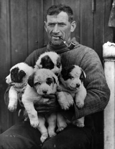 Tom Crean with sleigh dog puppies during the Shackleton expedition 1914–1916