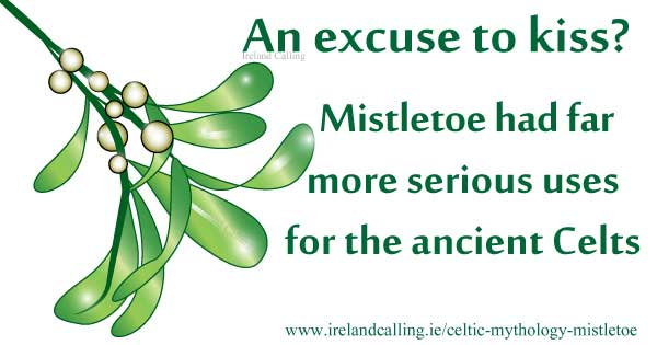 Mistletoe – sacred plant of the sun god. Image copyright Ireland Calling