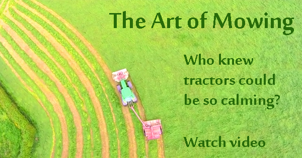 Relax, sit back and watch these tractors mow