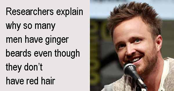 Researchers explain why so many men have ginger beards even though they don't have red hair. Photo copyright Gage Skidmore cc3