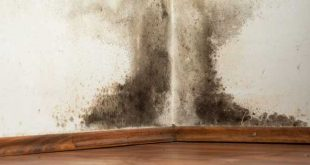 5 tips for dealing with damp