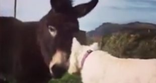 Moving video sees best friends Buster the dog and Jack the donkey reunited