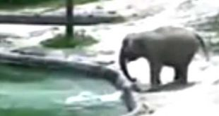 Elephants carry out dramatic rescue after baby fell into pool