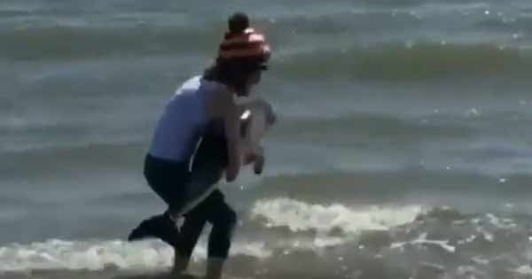 Woman rescues a baby dolphin on Irish beach