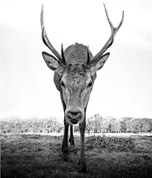 Photo of a deer by Graham Purdy