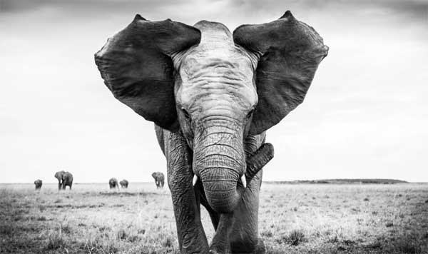 Photo of a elephant by Graham Purdy
