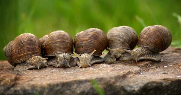 Ireland's only snail farmer claims they can give you a boost between the sheets