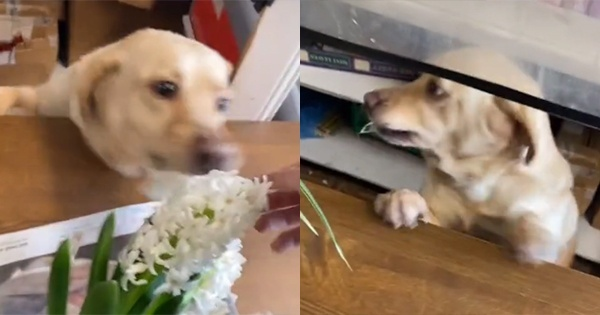 Shopkeeping dog has become a local celebrity and an internet superstar