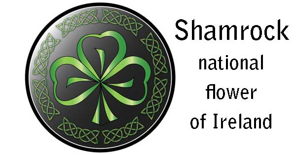 Shamrock - national flower of Ireland
