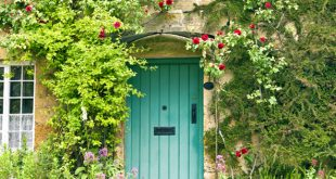 Time to climb - get the garden you want!